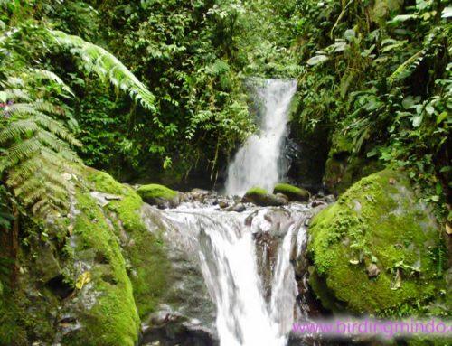 Tarabita – Santuario de las Cascadas